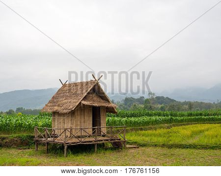 Old hut in rice field beautiful, cottage, country
