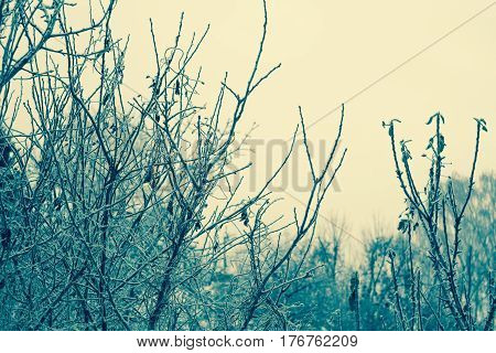 Trees In Winter Filtered