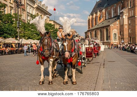 POLAND, KRAKOW- JULY 01: Carriage with lovely big brown horses moving down the cobbled streets in Krakow Poland on July 01, 2015