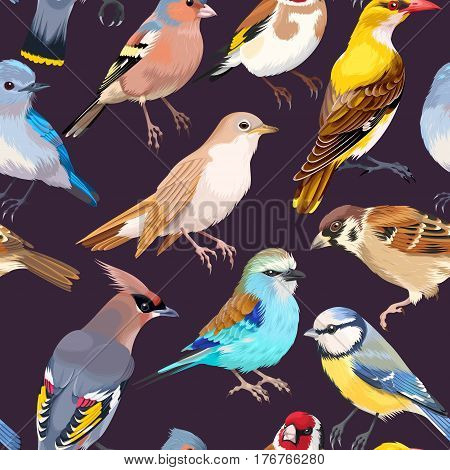 High detailed song birds vector seamless background
