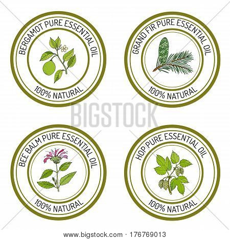 Set of essential oil labels bergamot, grand fir, bee balm, common hop. Vector illustration