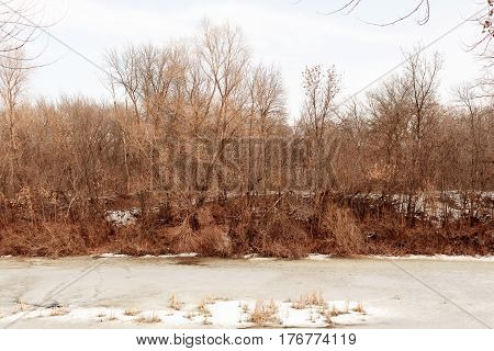 The river bank with dry trees in the winter