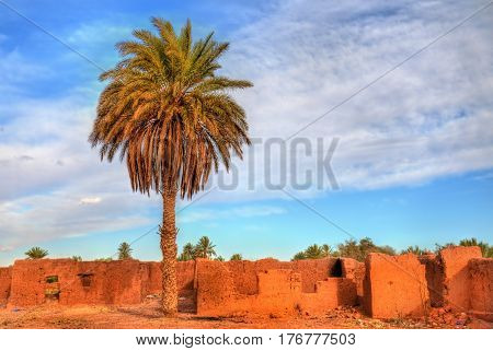 Palm grove near the old town of Ouarzazate - Morocco