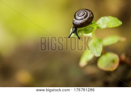 A small snail looks off the edge of a large blade of grass in front of a smooth yellow background.