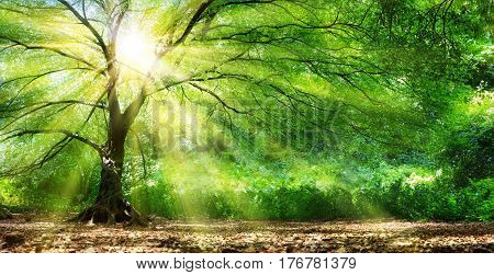 Tree With Sunshine In Wild Forest - Natura Background