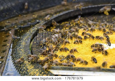 Bait bee spring. Food for bees. Apiculture