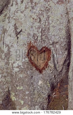 A heart shape carved into the base of a tree.