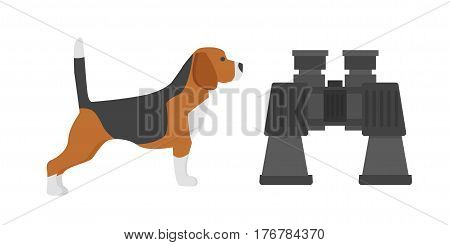 Show dog of breed beagle on white background hunter fast animal beautiful friendly terrier adorable pedigree doggy vector illustration. Cute domestic purebred hunt male pet vector.