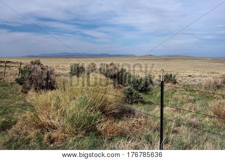 Tumbleweed and sage brush growing on the high plains of northern New Mexico in springtime