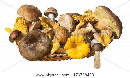 Different mushrooms (cep brown cap boletus orange-cap boletus paxil chanterelle) in basket