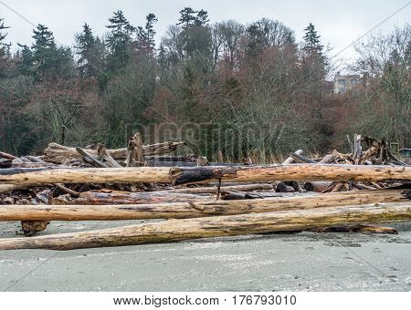 A view of driftwood logs along the shore at Saltwater State Park in Washington State.