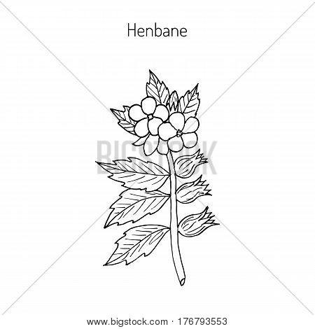 Black Henbane or Hyoscyamus niger. Poisonous plant. Hand drawn botanical vector iluustration