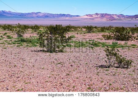 Desolate rural landscape with rocks and creosote plants taken in the Mojave Desert, CA
