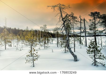 Northern winter landscape. The shore of Lake Vicheltajärvi. Spilling the Pista River. Karelia. Russia