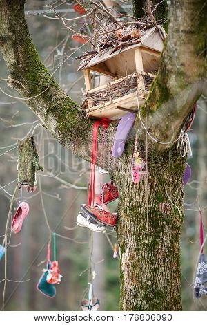 PEREDELKINO/ RUSSIA - MARCH5, 2017. The wonder tree near the museum of famous Russian children's writer Korney Chukovsky, hung with old children's shoes. Village Peredelkino, Moscow region, Russia.