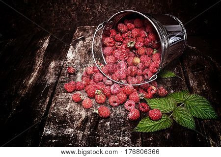 Sweet fragrant raspberries poured out of the bucket. Dark background