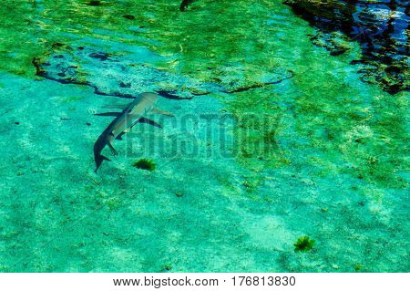 A young shark and his shadow taken from above the water. New Providence Island, Nassau, Bahamas.