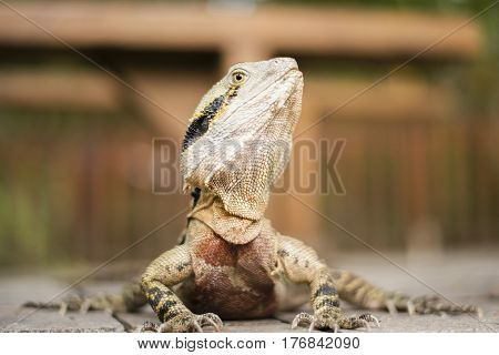 Water Dragon Outside During The Day.