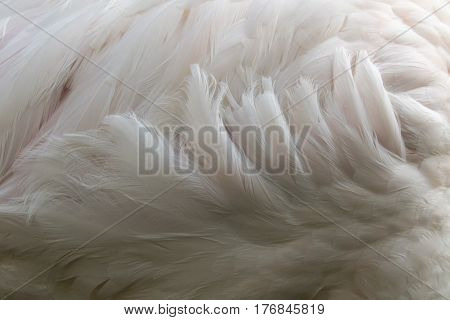 Flamingo feathers Abstract background Fur. wild animals.