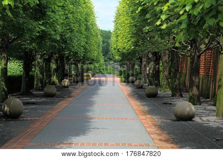 Two row tree lined pathway in the park