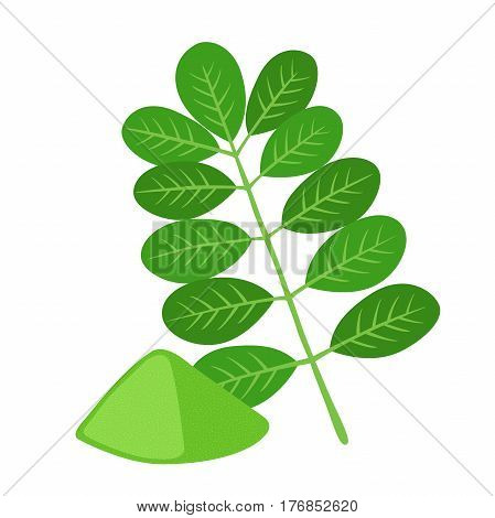 Moringa, vegetarian superfood. Healthy nutrition. Herb, vegetable, powder, tree in flowerpot. Cartoon flat vector style.