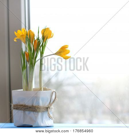 Gift box with flowers of flowering crocus on the window background / natural ecological greeting