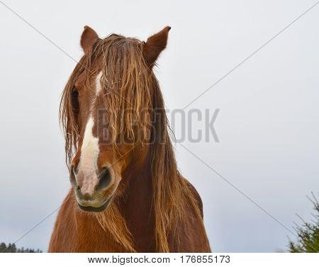 Portrait of a horse's head . South Bohemia Czech Republic