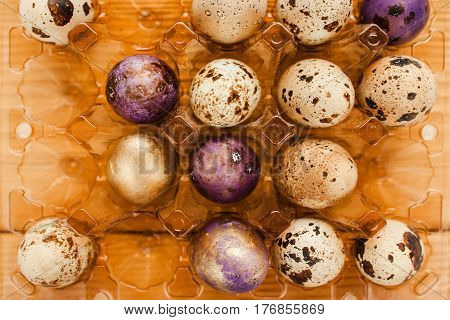 Small quail color and unpainted eggs in plastic container top view. Preparation for easter background.