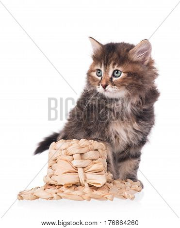 Cute siberian kitten with straw hat isolated over white background