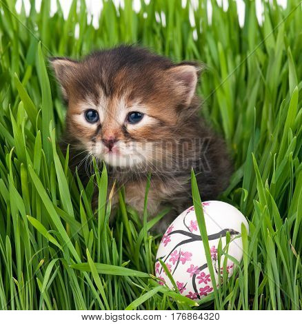 Cute siberian kitten with Easter egg over bright green grass background