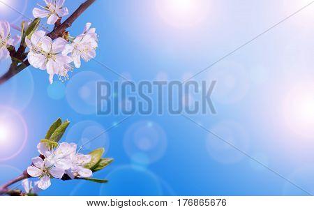 Art Spring Blooming background of  spring flowers