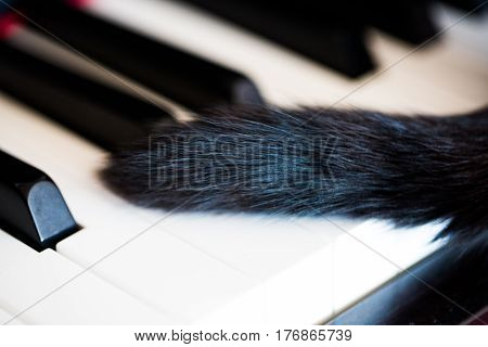 Cat tail on piano, pussycat, play, pose