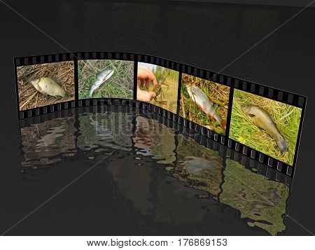 Film roll with color fish pictures (nature) on black background 3D illustration. All pictures are my own photos.