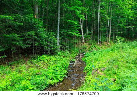 Edge of forest stand next to glade with slow flowing stream in summer, Bieszczady Mountain Range, Poland, Europe