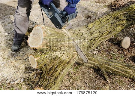 The electric chain saw in a man's hands cutting a log of wood.