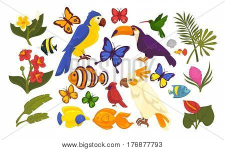 Set of exotic flora and fauna in cartoon style isolated on white. Vector illustration of colorful parrots, motley butterfly, tropical fish and various plants and flowers. Web banner flat design.