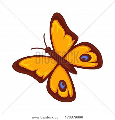 Orange butterfly with blue spots isolated on white. Morpho rhetenor or gossamer-winged butterflies. Vector botanical illustration of insect with symmetrical wings and antennas, stylish lepidoptera