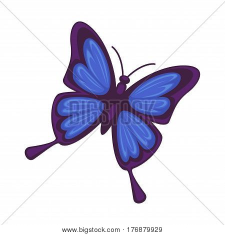Blue butterfly isolated on white background. Morpho rhetenor or gossamer-winged butterflies. Vector botanical illustration of insect with symmetrical wings and antennas in flat design cartoon style