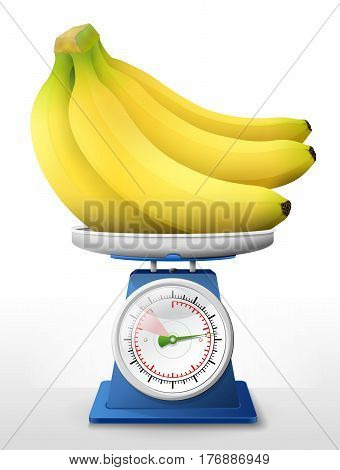 Banana fruit on scale pan. Weighing bunch of bananas on scales. Qualitative vector illustration about agriculture fruits cooking health food gastronomy botany etc