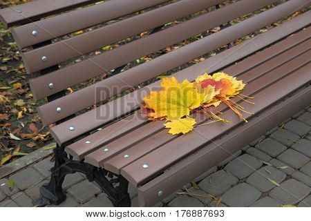 A small bouquet of maple leaves was left on the park bench.