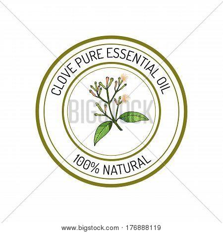 Clove, essential oil label, aromatic plant Vector illustration