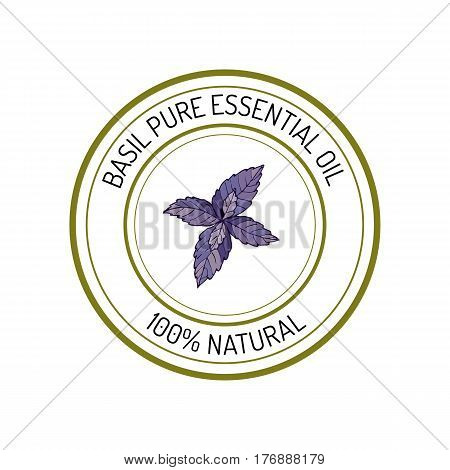 Basil, essential oil label, aromatic plant Vector illustration