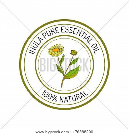 Inula, essential oil label, aromatic plant Vector illustration