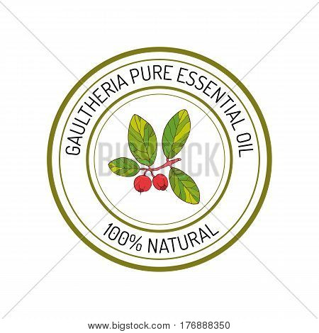 Gaultheria, essential oil label, aromatic plant Vector illustration