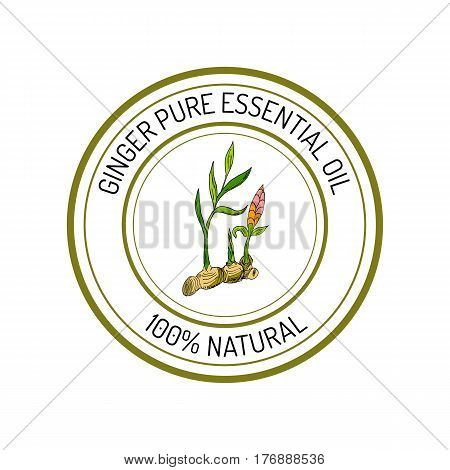 Ginger, essential oil label, aromatic plant Vector illustration
