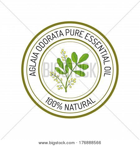 Aglaia odorata, essential oil label, aromatic plant. Vector illustration