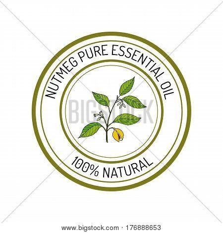 Nutmeg, essential oil label, aromatic plant Vector illustration