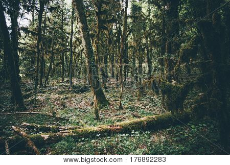 Boxwood Forest wild tropical jungle Landscape Travel serene scenic view misty and atmospheric