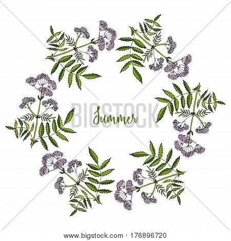 Hand drawing wild herbs wreath - valerian herb