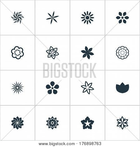 Vector Illustration Set Of Simple Rose Icons. Elements Lilac, Morning Glory, Orchids And Other Synonyms Ornament, Chamomile And Cypress.